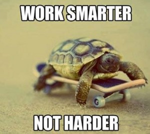 turtle on mini skateboard